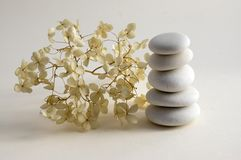 Harmony and balance, cairns, dry hydrangea white and red flowers. Harmony and balance, cairns, simple poise stones on white background, rock zen sculpture, five Royalty Free Stock Images