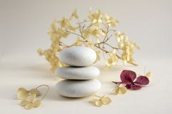 Harmony and balance, cairns, dry hydrangea white and red flowers. Harmony and balance, cairns, simple poise stones on white background, rock zen sculpture, five Stock Photo