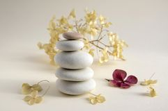 Harmony and balance, cairns, dry hydrangea white and red flowers. Harmony and balance, cairns, simple poise stones on white background, rock zen sculpture, five Stock Photography