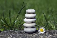 Harmony and balance, simple pebbles tower and daisy flower in bloom in the grass, simplicity, five stones. In sunlight Royalty Free Stock Photography