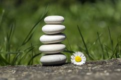 Harmony and balance, simple pebbles tower and daisy flower in bloom in the grass, simplicity, five stones. In sunlight Royalty Free Stock Images