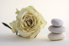 Harmony and balance stack of smooth white pebbles on light background. Stone tower and white rose flower Stock Photo