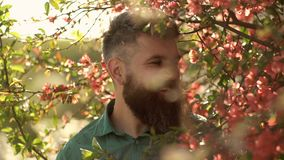 Harmony concept. Bearded man with stylish haircut with red flowers tree on background. Man with beard and mustache on stock video footage