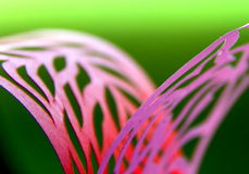 Paper abstract lace background. Carved paper ribbons in pink color on green background Royalty Free Stock Photos