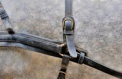 Harnais pour des chevaux Photographie stock libre de droits