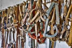 Harness Fotografía de archivo