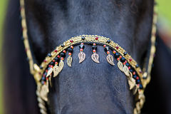 Harness on black horse royalty free stock photography