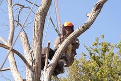 Harness de seguridad del hombre que desgasta en un árbol Imagenes de archivo