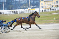 Harness Horse Race