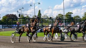 Harness horse racing starting gate royalty free stock image