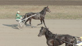Harness horse - Two racing horses with a jockeys on a track (slow motion) stock footage