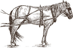 Harness horse. Vector drawing of a harnessed horse stock illustration