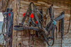 Harness for horses from leather. In Romania royalty free stock photography