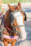 Harness pony portrait with clipping path for carriage. Royalty Free Stock Photography