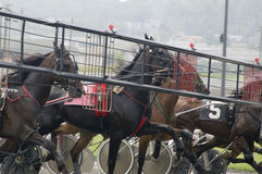 Harness race-1. Harness race horses coming out of starting gate Royalty Free Stock Image