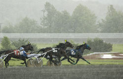 Harness race-7. Closeup of harness racers in the rain in the straight away lots of action Royalty Free Stock Photography
