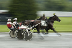 Harness race close call. Two horses coming to finish line fast action blur background Stock Image