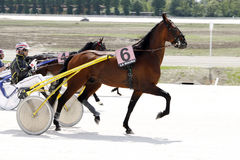 Harness race course Royalty Free Stock Photo