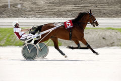 Harness racecourse Stock Photo