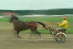 Harness Racer In Motion Royalty Free Stock Photography