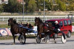 Harness racing-1 Stock Photo