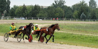 Harness racing 2. Romanian National Trotting Derby, Ploiesti 2011-07-03 stock photography
