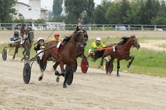 Harness racing. Romanian National Trotting Derby, Ploiesti 2011-07-03 Royalty Free Stock Image