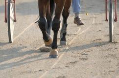 Harness racing Stock Image