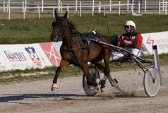 Harness racing-4 Stock Photos