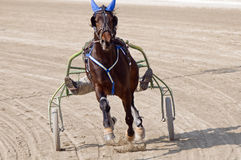 Harness racing