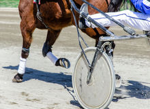 Harness racing. Royalty Free Stock Photos