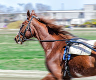 Harness racing. Royalty Free Stock Photos