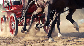 Harness racing. Racing horses harnessed to strollers Royalty Free Stock Images