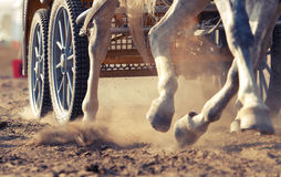 Harness racing. Racing horses harnessed to strollers Royalty Free Stock Photos