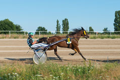 Harness Racing on Karlshorst racetrack Stock Images