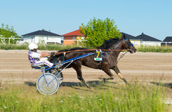 Harness Racing on Karlshorst racetrack Royalty Free Stock Image