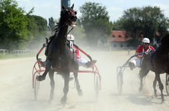 Harness racing Stock Image