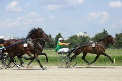 Harness racing Royalty Free Stock Image