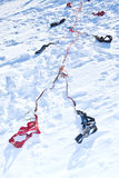 Harness for racing sled dogs Stock Photography