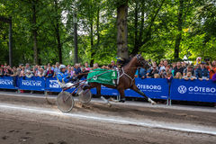 Harness racing on street in gothenburg city. royalty free stock image