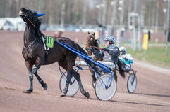 Harness racing in Sweden Stock Photography