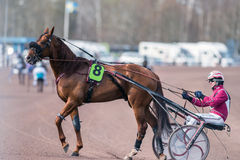 Harness racing in Sweden Royalty Free Stock Photography