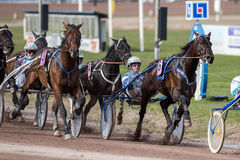 Harness racing in Sweden Royalty Free Stock Image