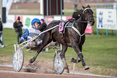 Harness racing in Sweden Royalty Free Stock Photos