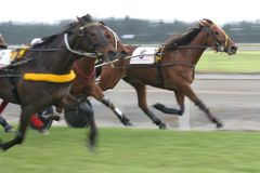 Harness Racing / Trotting Royalty Free Stock Photos