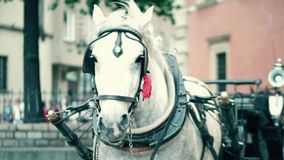 Harnessed dapple gray horse on the street Stock Image