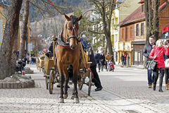 Harnessed Horse stands at the Krupowki street Royalty Free Stock Photo