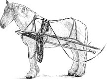 Harnessed horse Stock Image