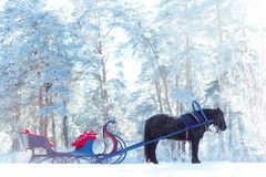 Free Harnessed Horse With A Sleigh In The Snow-covered Forest. Winter Royalty Free Stock Photography - 130494927