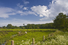 Harnham water meadows Stock Photo